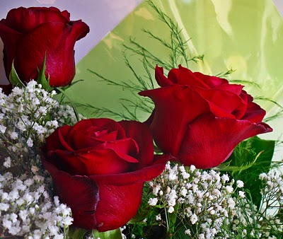 20100514172829-rosas.jpg