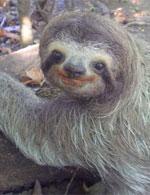 20090730142628-perezosos-en-extincion.jpg
