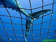 Greenpeace acusa a CITES de permitir la extinción de especies