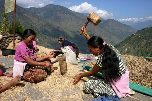 Alimentos y Cambio Climático: el eslabón olvidado.